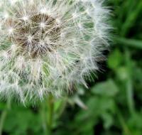 Dispelling Myths – Restrictive Covenants